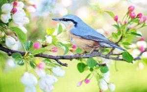Životinje i biljke - nada za čovječanstvo