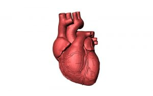 Uznemireno srce - savjeti liječnika, smirenje i odmor, izbjegavanje umaranja, prestanak pušenja, smanjenje tjelesne težine, napregnutost i živčana napetost, smanjenje tereta nogama