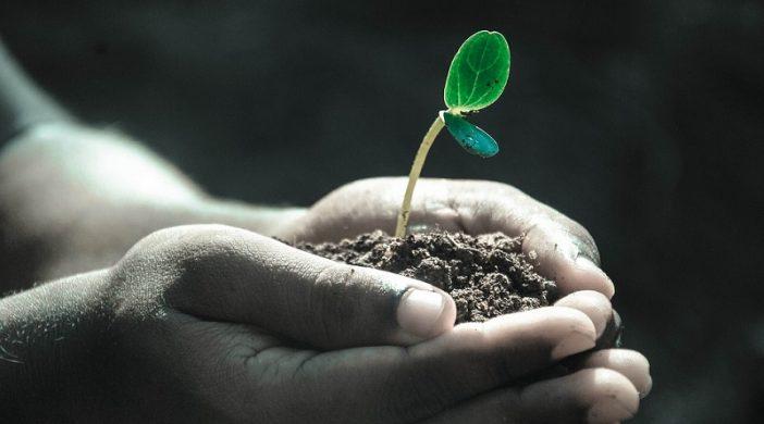 Biljke hvataju i prenose vibracije Svemira
