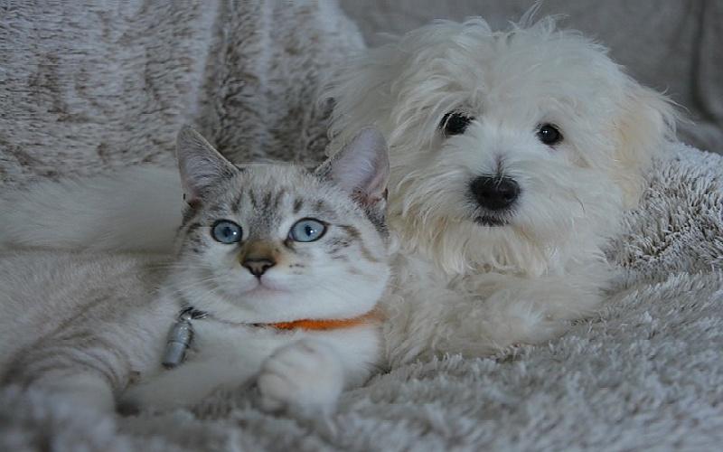Psi i mačke: Znate li koliko oni imaju godina?