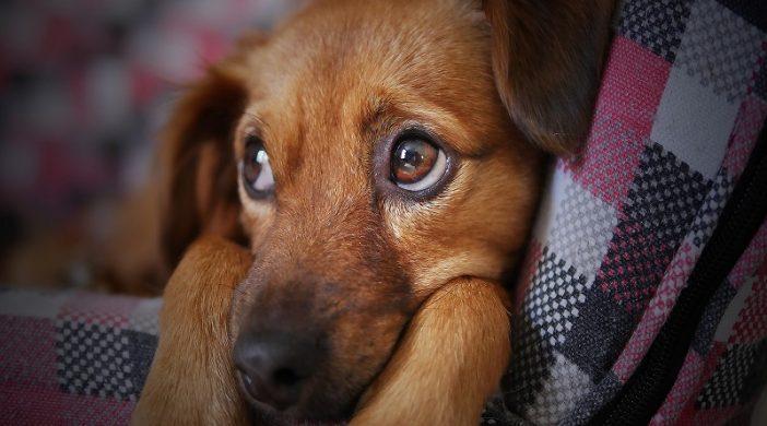 Zanimljivosti o psima i 10 najpametnijih pasa