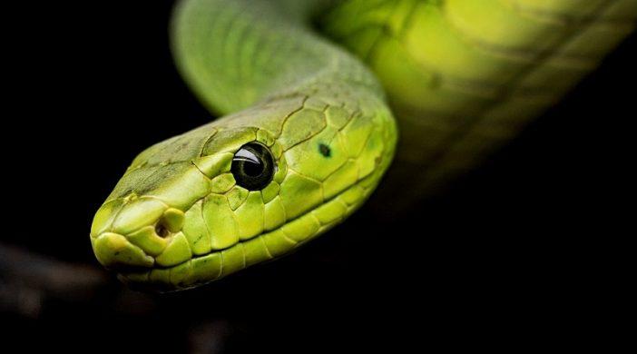 Najotrovnije zmije na svijetu za koje niste znali