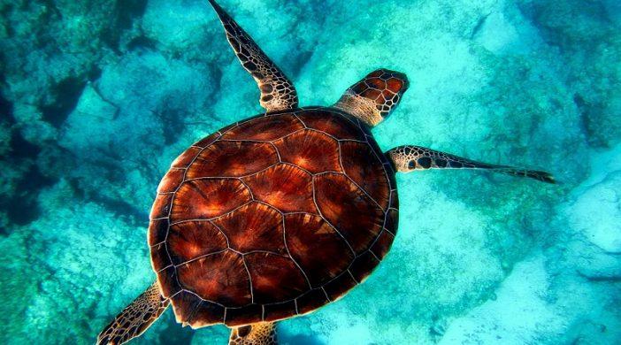 Ugrožene vrste divljih životinja u svijetu