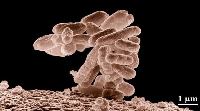 Bakterija Escherichia coli i kako se riješiti ove napasti