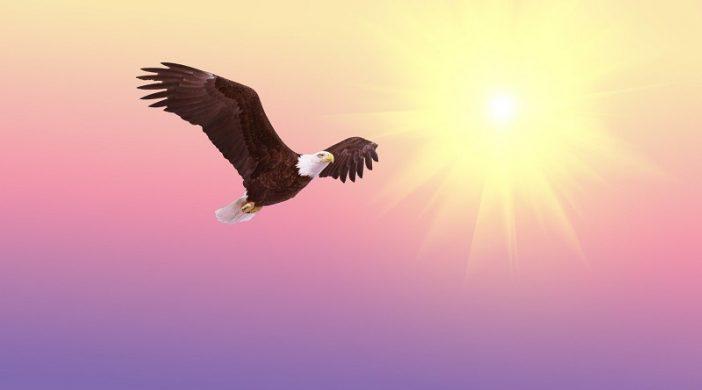 Priča o orlu: Najljepše mudre i poučne priče