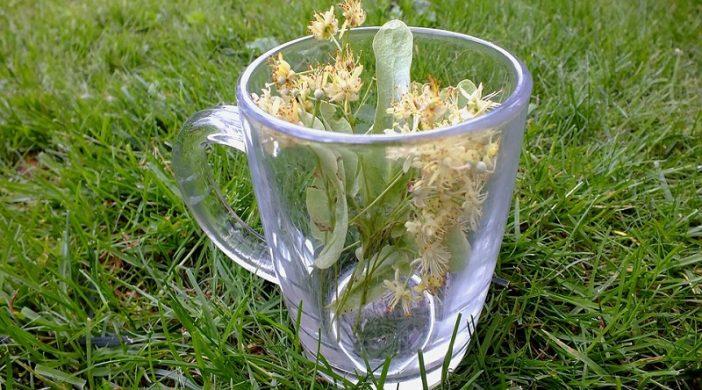 Čaj od lipe popravlja imunitet i ublažava grlobolju